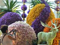 曼谷举行兰花展
