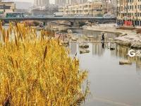 李村河四季画卷:来自大自然的真切告白