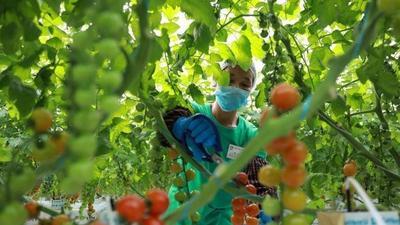 """构建市、镇、村""""112N""""农业经济发展平台,莱西精准施策推进乡村振兴"""