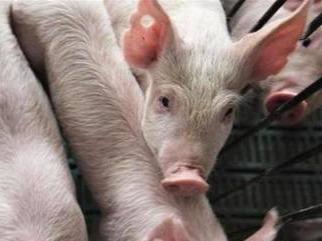 农业农村部:四川省宁南县查出非洲猪瘟疫情