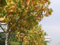 来青岛,邂逅色彩斑斓的秋