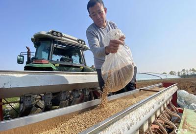 即墨区:小麦播种紧张有序