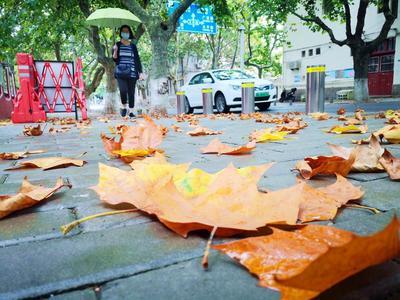 蓝色预警!今天白天,青岛大部地区仍有较强降雨