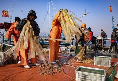 八带鞘、安康鱼、鳗鳞……初冬码头扫货忙
