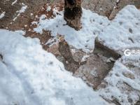 """初冬的崂山不止有雪,还有""""可爱量""""超标的它们!"""