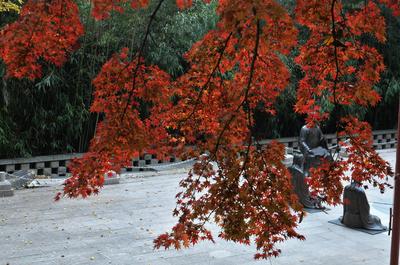 太清宫赏红叶 今年最后一个档期了