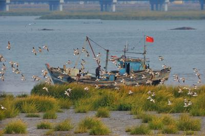 候鸟蹁跹,青岛国家级海洋公园越冬
