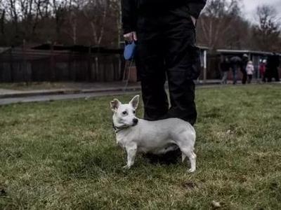济南近十年犬伤人案2万余起,拟规定遗弃犬只者将被处以2000元罚款