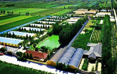 平度南村儒商王雨农做响青岛年猪品牌 实现生态效益和经济效益双赢
