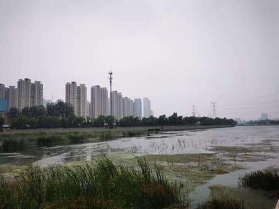 2020年12月,青岛14处城市黑臭水体2处断流,4处不达标