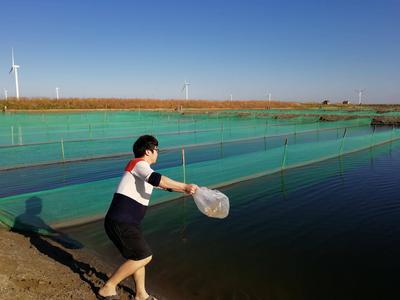 水产苗种检疫合格率100%,青岛不断强化水产品质量安全执法