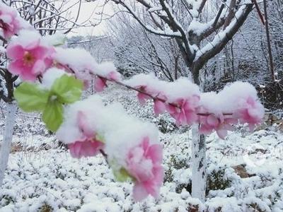 下班回家注意安全!今晚起,青岛全市都有雨夹雪,明天下午降水结束!