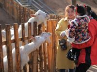 花样过春节 带娃儿去看动物卖萌
