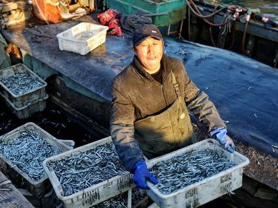 @青岛渔民,农业农村部调整海洋伏季休渔制度,渤黄海海域5月1日起休渔