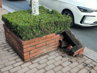记者在现场   人行道上市政绿植花坛的砖头外壁破损,快修!