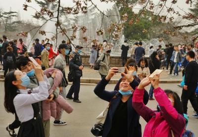 中山公园第一波樱花开了!来,接图