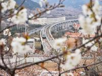 青岛地铁11号线:穿越杏林、樱桃花海,开往春天