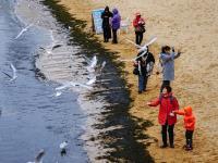 有了海鸥与海,青岛的冬季不会太漫长