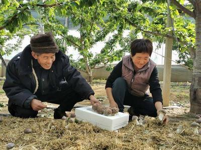 年产值3亿元,明年3月竣工达产!平度将建青岛市规模最大的香菇产业基地