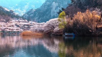 北九水屏保级大图:水库+樱桃花,美到上头
