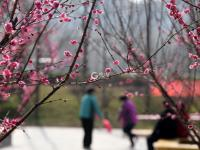 大红梅、玉蝶梅、宫粉梅…你认识几种?青岛这个公园都凑齐了| 云赏花⑥