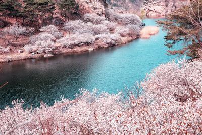 12张画幅里的青岛四月丨美图周赏⑩
