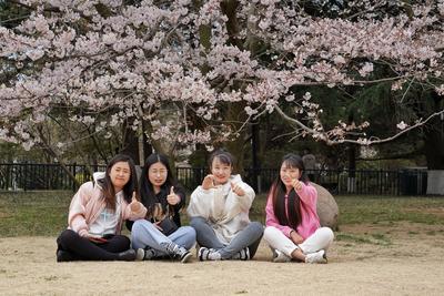 带上那个TA,一起去中山公园赏首届樱花节