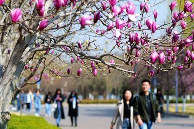 花开春意浓!走,去山科大赏花呀