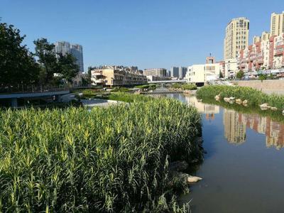 青岛11处城市黑臭水体水质全部达标!3月份监测结果公布
