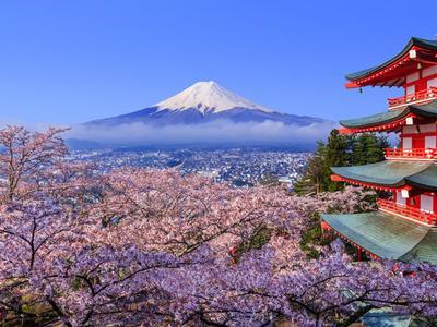 日本现千年来最早樱花季,美好景象背后掩藏怎样的危机?