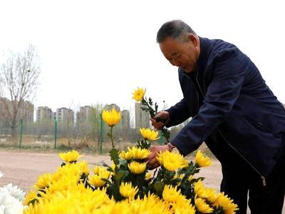 """青岛这个区10余处""""清明节祭扫鲜花免费领取点"""",约3.5万支菊花被领取"""