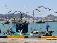 春捕船靠岸实拍:虾虎、八带、鮟鱇鱼