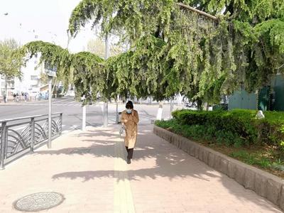 记者在现场 | 人行道上树枝低垂阻碍通行,市民呼吁快修剪