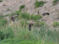 水清岸绿鸟来栖,好一幅湿地生态画卷!