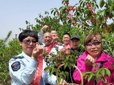 吃樱桃、住民宿……他们为青岛空巢老人过了一个难忘的母亲节