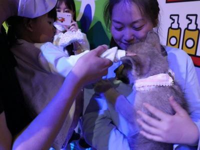 小北极狼也过儿童节啦!青岛海昌极地纯种北极狼三千金首次亮相