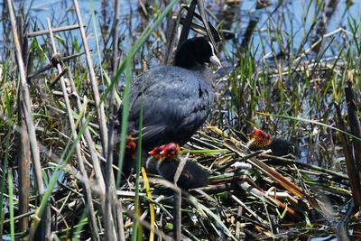探索、觅食……首轮出生鸟宝宝畅游白沙河湿地