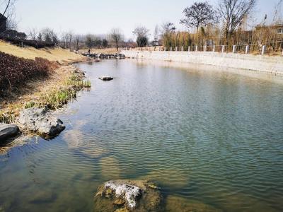 青岛四部门联合发文:三年内完成全市现有82条农村黑臭水体治理