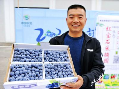 """""""黄岛蓝莓季""""正式开嗨!小小果子玩出大产业"""