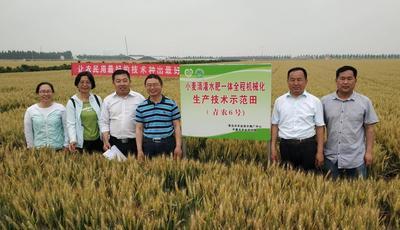小麦新品种新技术观摩会启动