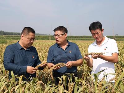 莱西龙水社区官道自然村300多亩小麦丰收
